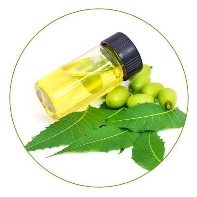 big-organic-basket-neem-oil
